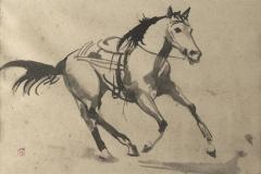 paard-zonder-ruiter-19-kopie-1